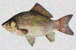 видеть рыбу во сне